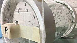 MedicalMosquitos