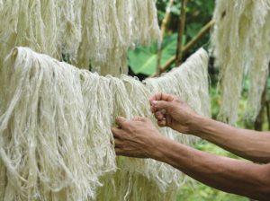 ; Piñatex® fiber drying (inset).
